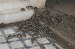When a property becomes infested with mice, rats and biological material like fecal matter or urine, the situation is suitable for the spread of disease