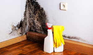 melbourne mould remediation